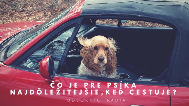 7 odborníkov na psíkov radí: Čo je pre psíka najdôležitejšie,keď cestuje?