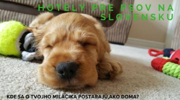 Kde nájsť na Slovensku dobrý hotel pre psov?