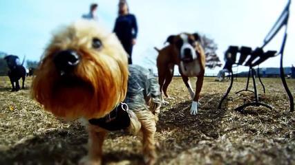 Video:Krásny deň v psom parku