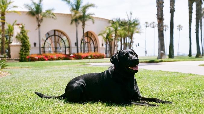 Video:Pet friendly hotel v Californii ponúka úžasné služby