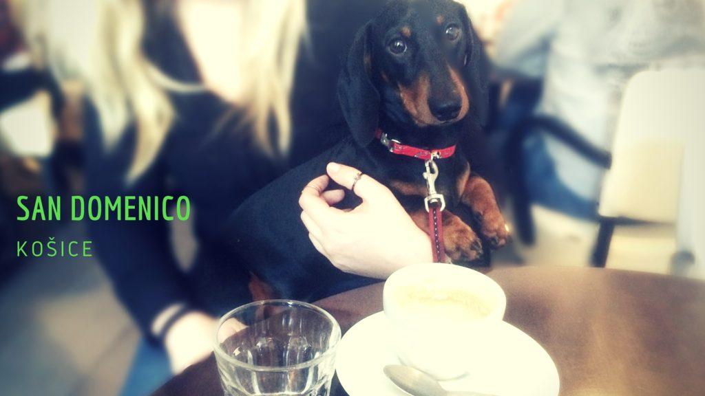 San Domenico dog friendly kaviareň