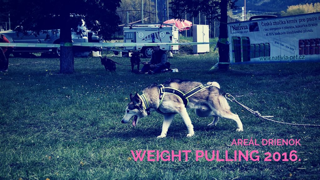 Weight pulling 2016