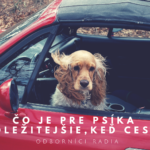 čo je pre psíka najdôležitejšie,keď cestuje