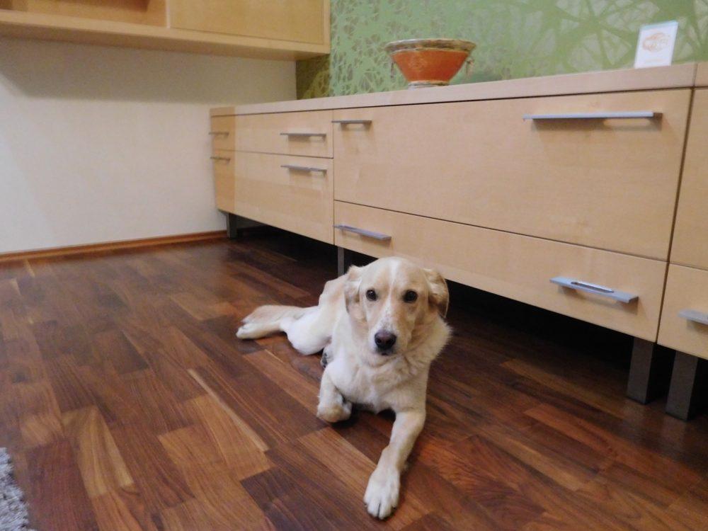 ubytovanie so psom zoerentals trenčín