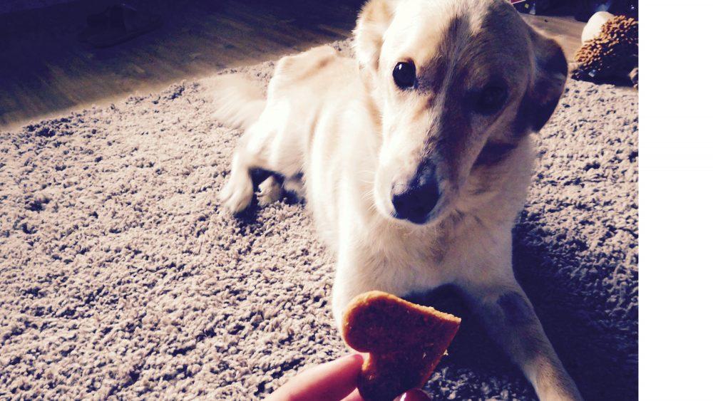 jedlo pre psy pamlsky pre psíkov