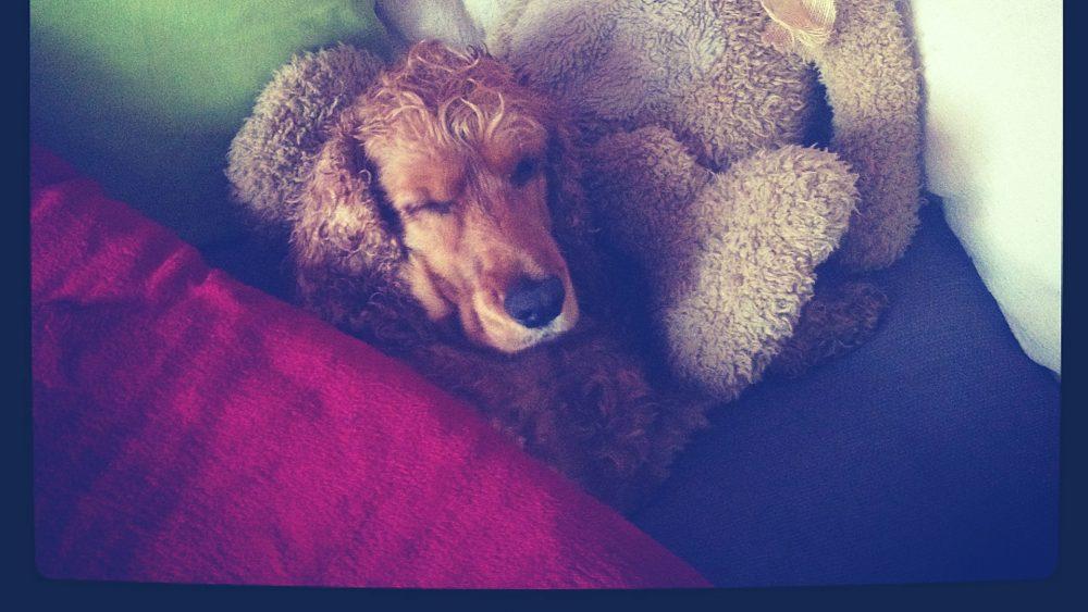 deka pre psa