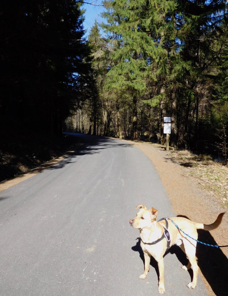 výlet so psom gaderska dolina
