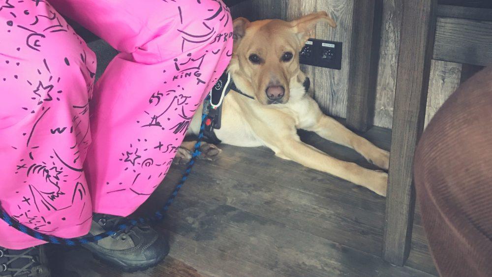 dogfriendly donovalsky pivovar