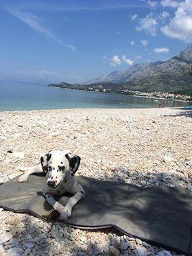 dogfriendly pláže