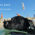 pláže pre psov chorvátsko