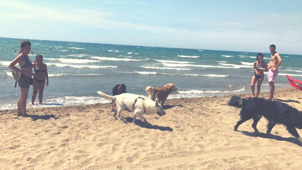 plaz pre psikov