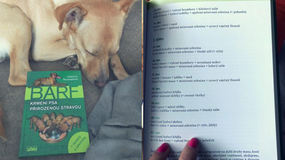 ako porozumiet svojmu psovi