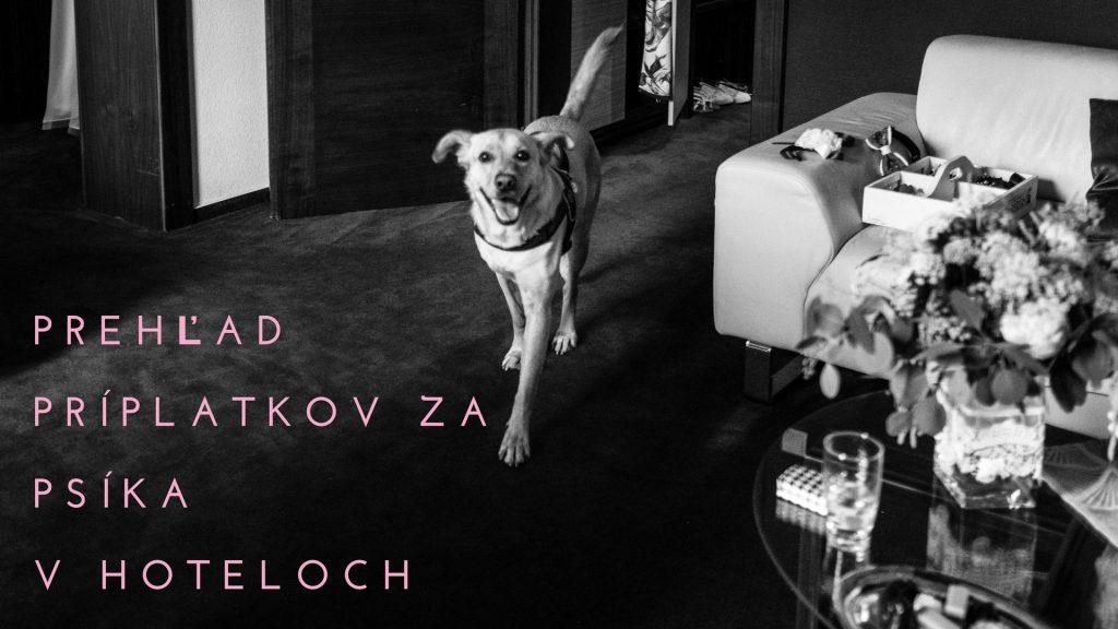 Príplatok za psa v hoteli – prehľad nielen podľa mojich skúseností