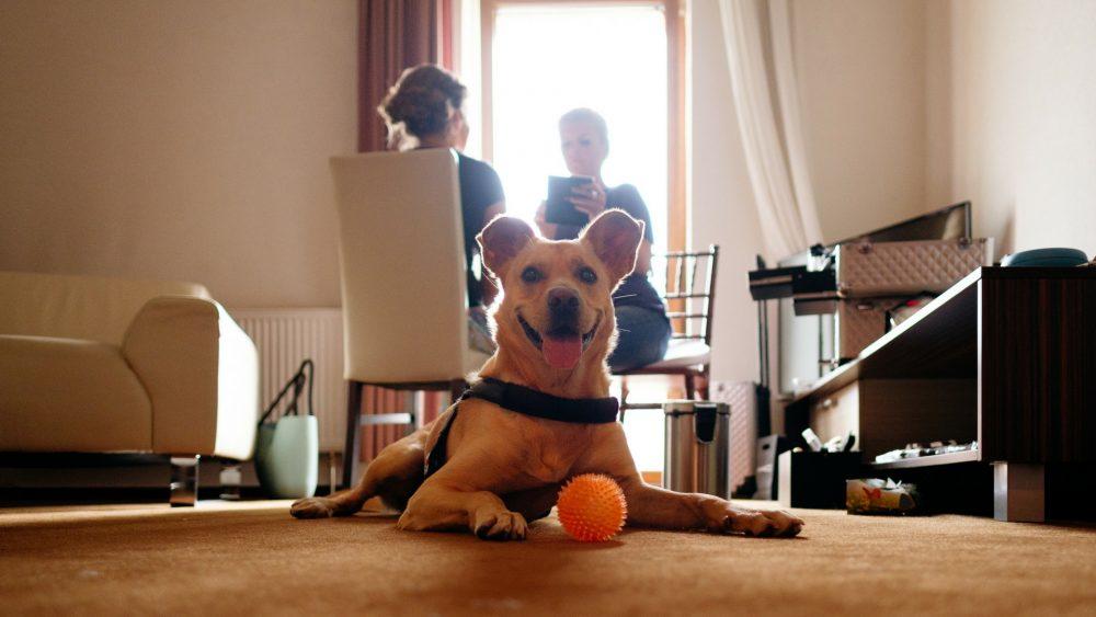 priplatok za psa v hoteli