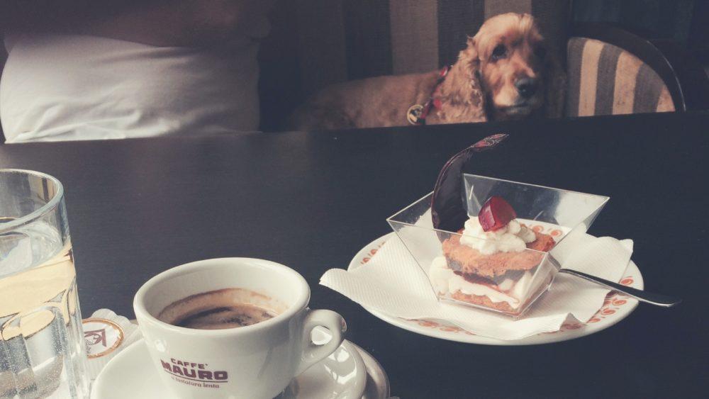 príplatok za psa v hoteli