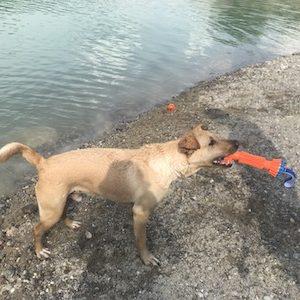 hračka do vody pre psa