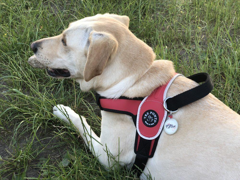 známka pre psíka