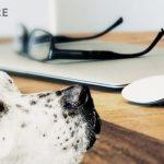 aplikácie pre psíčkarov