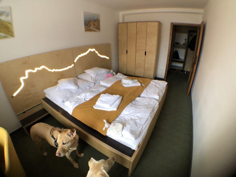dogfriendly hotel
