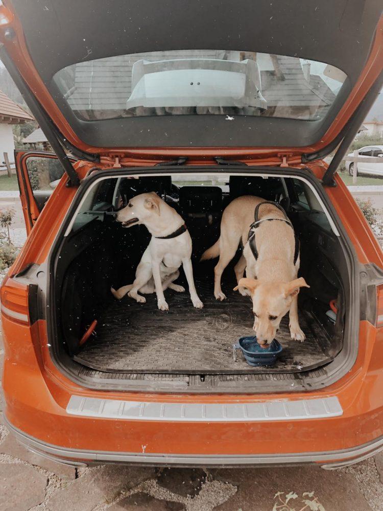 ako psikovi ulahcit prepravu v aute