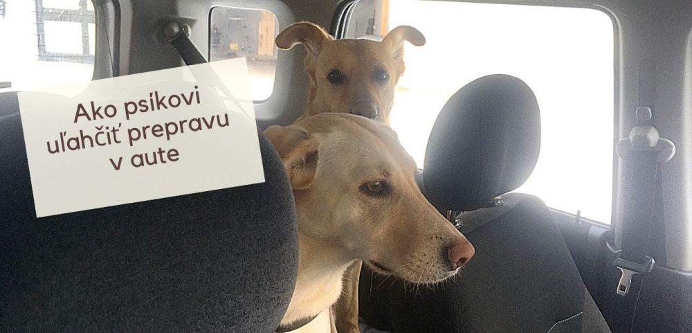 Ako psíkovi uľahčiť prepravu v aute